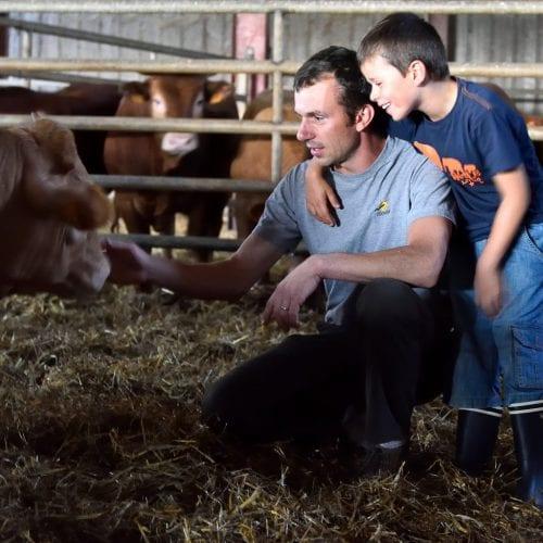 Un agriculteur et son fils soignent un veau d'Aveyron et du Ségala label rouge IGP